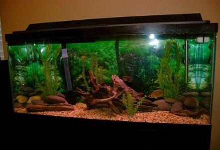 30 Gallon Fish Tank 3 - 30 gallon fish tank