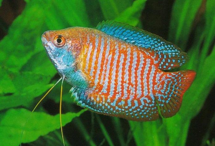 First Pet Fish